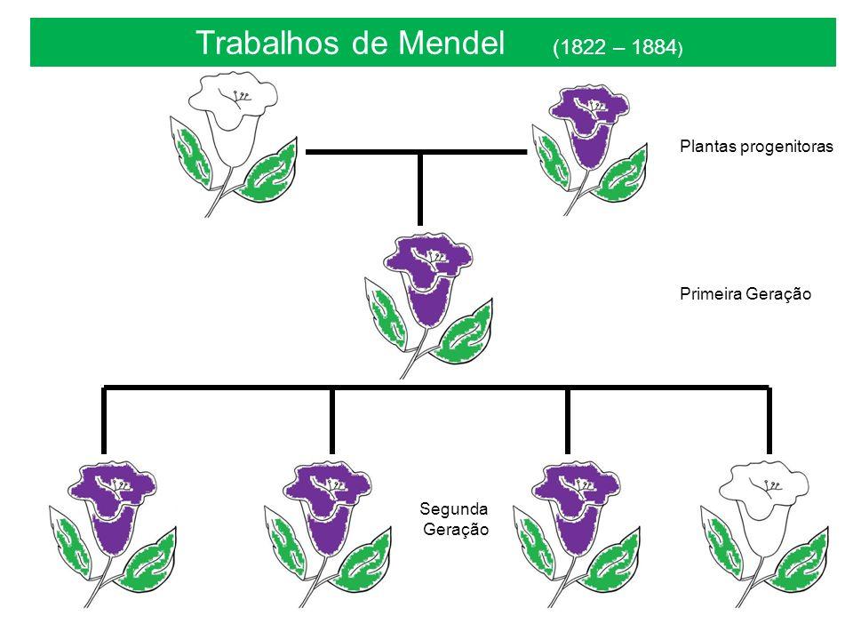Trabalhos de Mendel (1822 – 1884 ) Plantas progenitoras Primeira Geração Segunda Geração