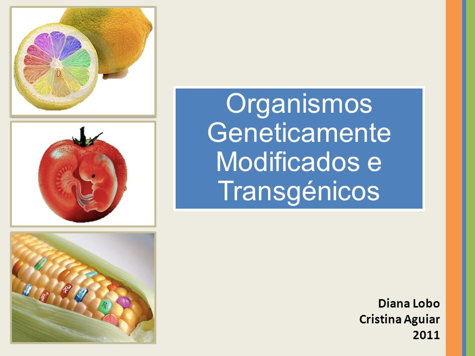 Organismos Geneticamente Modificados e Transgénicos Diana Lobo Cristina Aguiar 2011