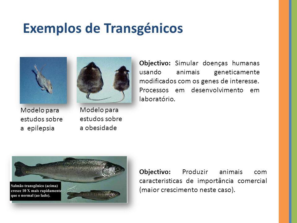 Exemplos de Transgénicos Modelo para estudos sobre a epilepsia Modelo para estudos sobre a obesidade Objectivo: Simular doenças humanas usando animais geneticamente modificados com os genes de interesse.