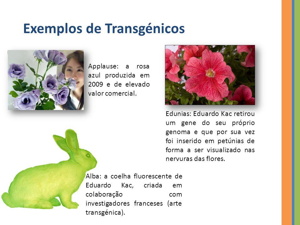Exemplos de Transgénicos Applause: a rosa azul produzida em 2009 e de elevado valor comercial.