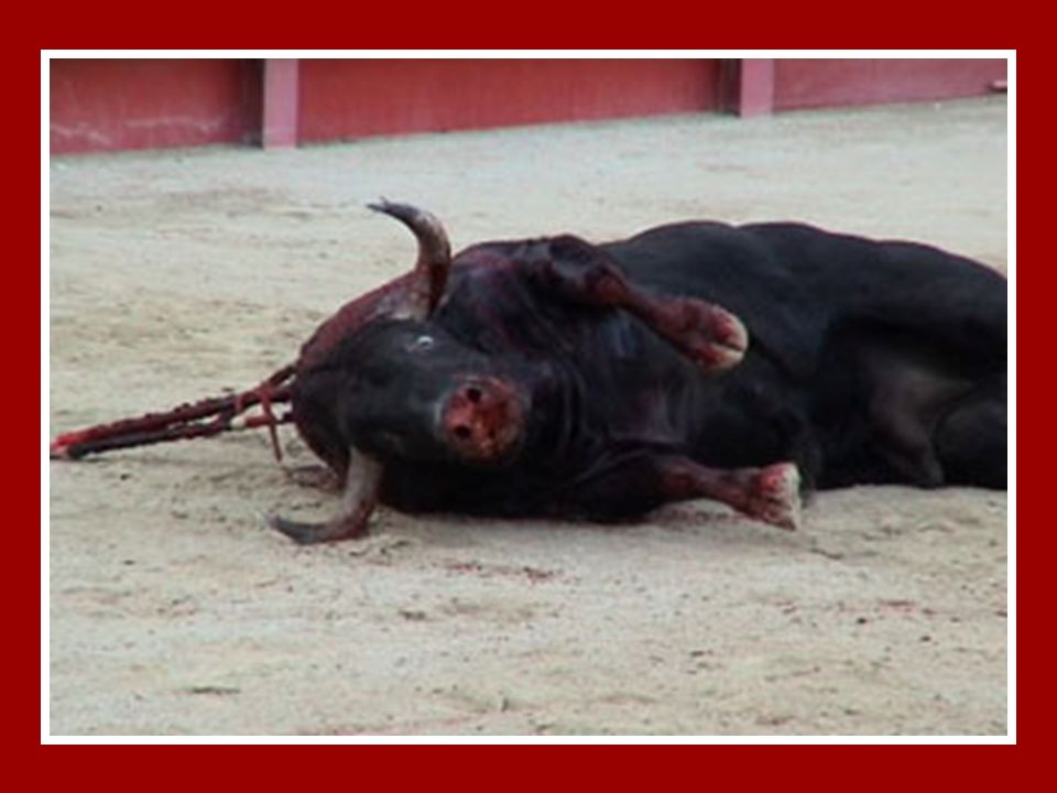 A CORRIDA DE TOIROS PARA MIM, É MATAR POR DIVERSÃO… Talvez já tenhas ouvido dizer que a festa de touros é uma arte, mas não é… É uma ciência... A Ciên