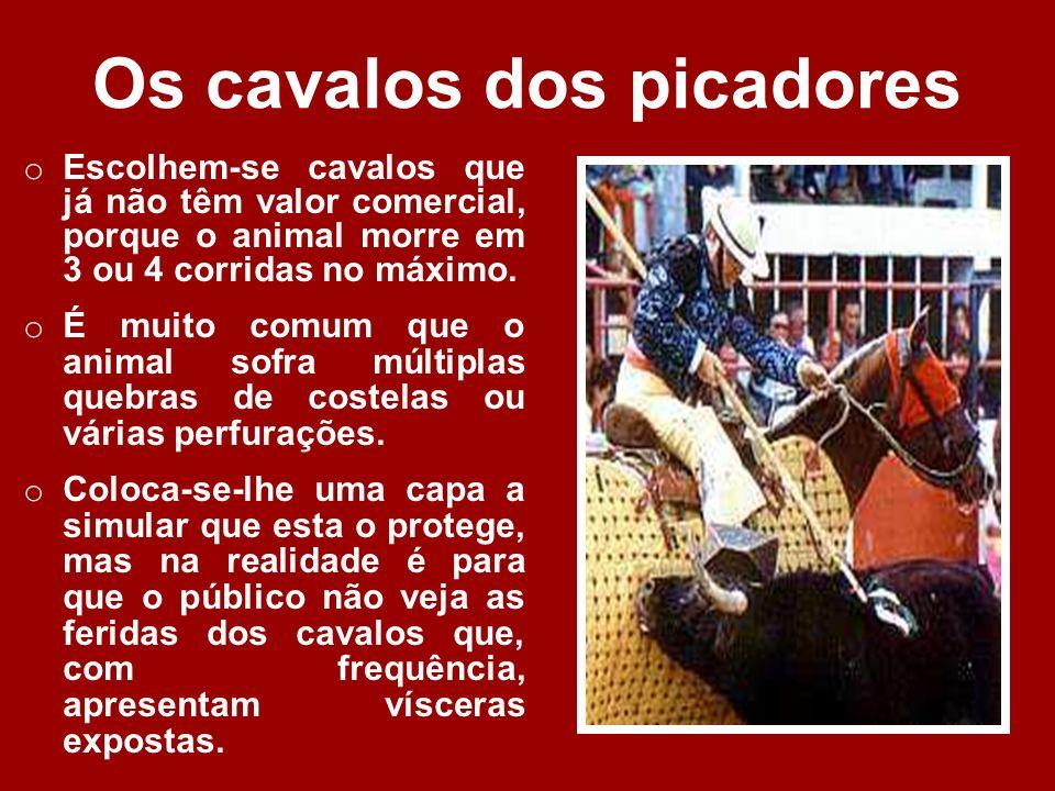 Os cavalos dos picadores o Escolhem-se cavalos que já não têm valor comercial, porque o animal morre em 3 ou 4 corridas no máximo.