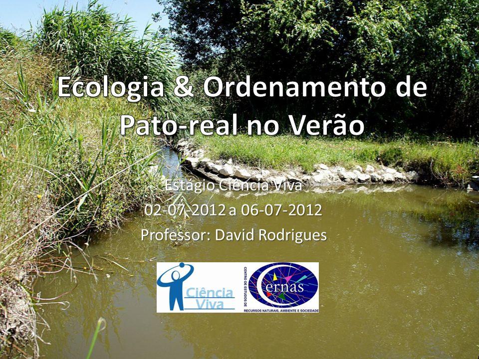 Estágio Ciência Viva 02-07-2012 a 06-07-2012 Professor: David Rodrigues