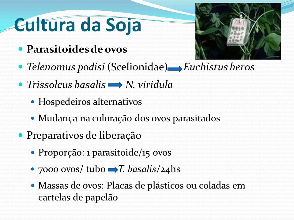 Parasitoides de ovos Telenomus podisi (Scelionidae) Euchistus heros Trissolcus basalis N. viridula Hospedeiros alternativos Mudança na coloração dos o