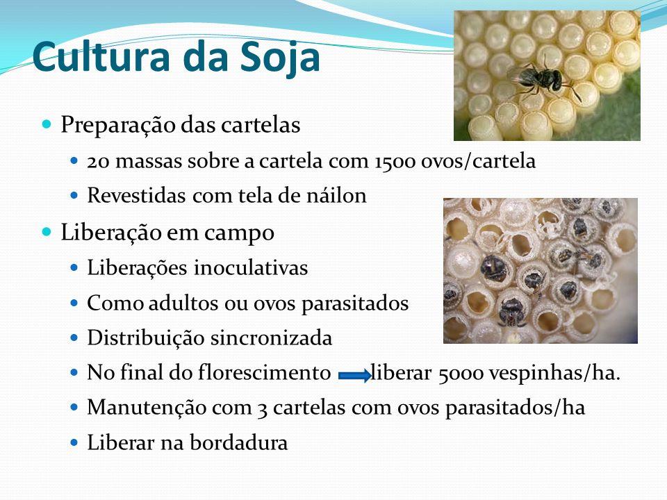 Preparação das cartelas 20 massas sobre a cartela com 1500 ovos/cartela Revestidas com tela de náilon Liberação em campo Liberações inoculativas Como
