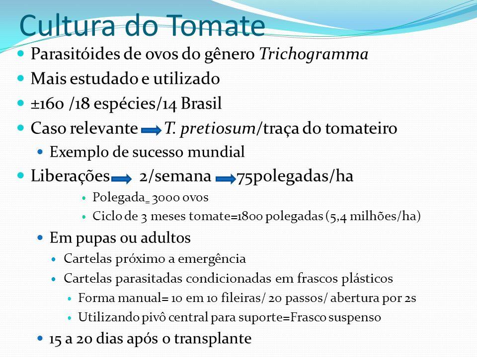 Parasitóides de ovos do gênero Trichogramma Mais estudado e utilizado ±160 /18 espécies/14 Brasil Caso relevante T. pretiosum/traça do tomateiro Exemp