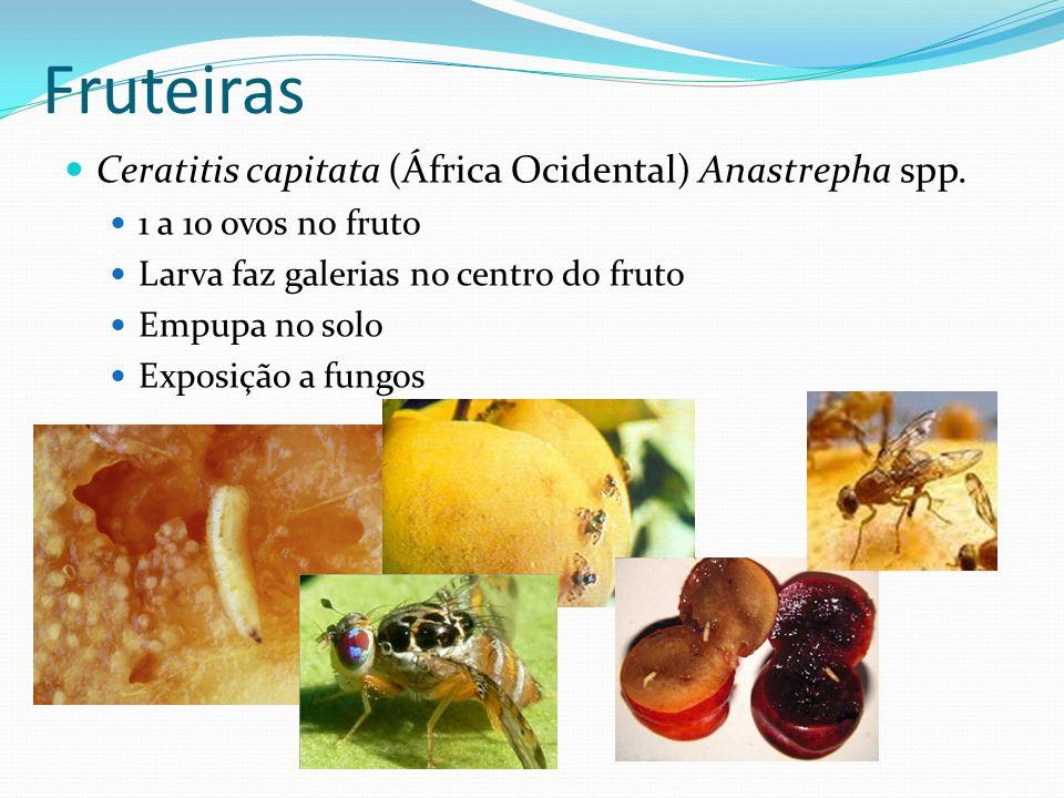 Ceratitis capitata (África Ocidental) Anastrepha spp. 1 a 10 ovos no fruto Larva faz galerias no centro do fruto Empupa no solo Exposição a fungos Fru