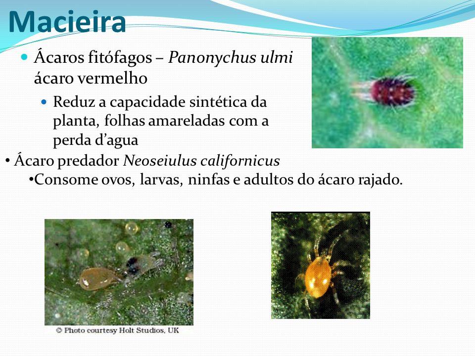 Macieira Ácaros fitófagos – Panonychus ulmi ácaro vermelho Reduz a capacidade sintética da planta, folhas amareladas com a perda dagua Ácaro predador