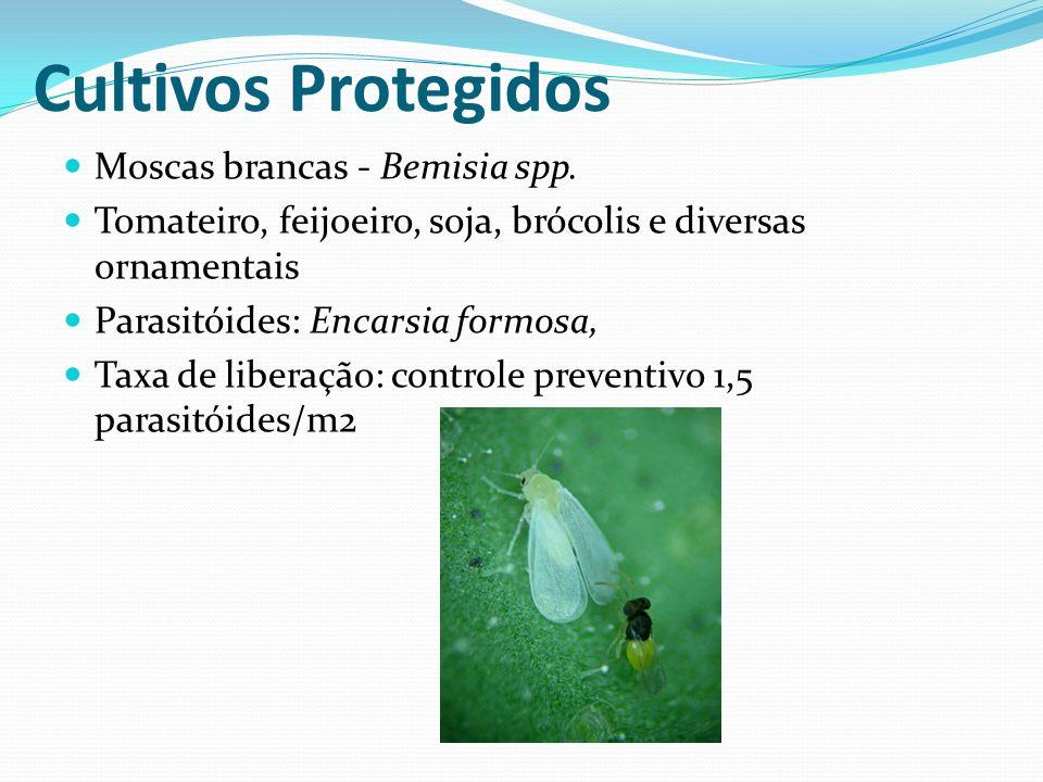 Moscas brancas - Bemisia spp. Tomateiro, feijoeiro, soja, brócolis e diversas ornamentais Parasitóides: Encarsia formosa, Taxa de liberação: controle