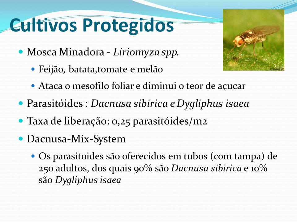 Mosca Minadora - Liriomyza spp. Feijão, batata,tomate e melão Ataca o mesofilo foliar e diminui o teor de açucar Parasitóides : Dacnusa sibirica e Dyg