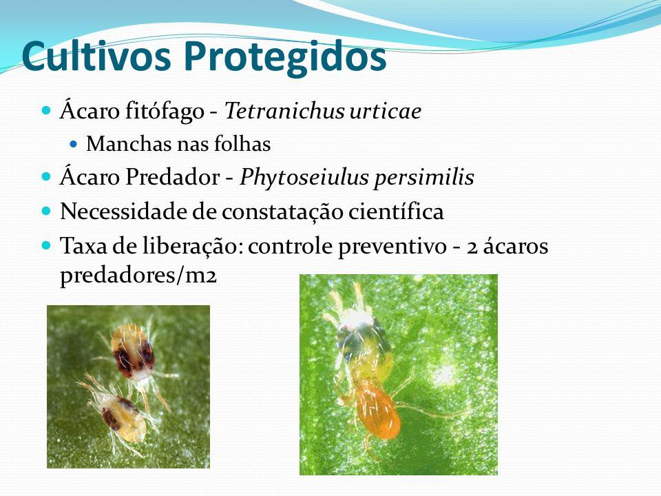 Ácaro fitófago - Tetranichus urticae Manchas nas folhas Ácaro Predador - Phytoseiulus persimilis Necessidade de constatação científica Taxa de liberaç