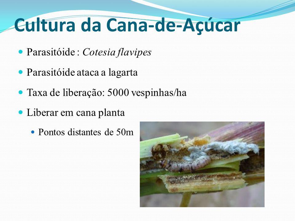 Parasitóide : Cotesia flavipes Parasitóide ataca a lagarta Taxa de liberação: 5000 vespinhas/ha Liberar em cana planta Pontos distantes de 50m Cultura