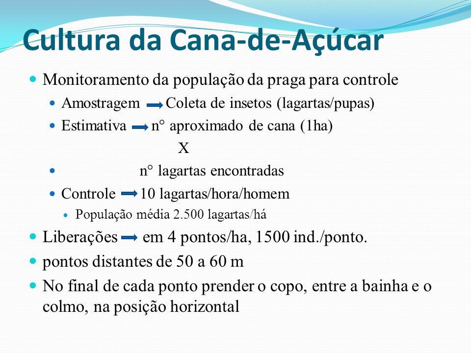Monitoramento da população da praga para controle Amostragem Coleta de insetos (lagartas/pupas) Estimativa n° aproximado de cana (1ha) X n° lagartas e