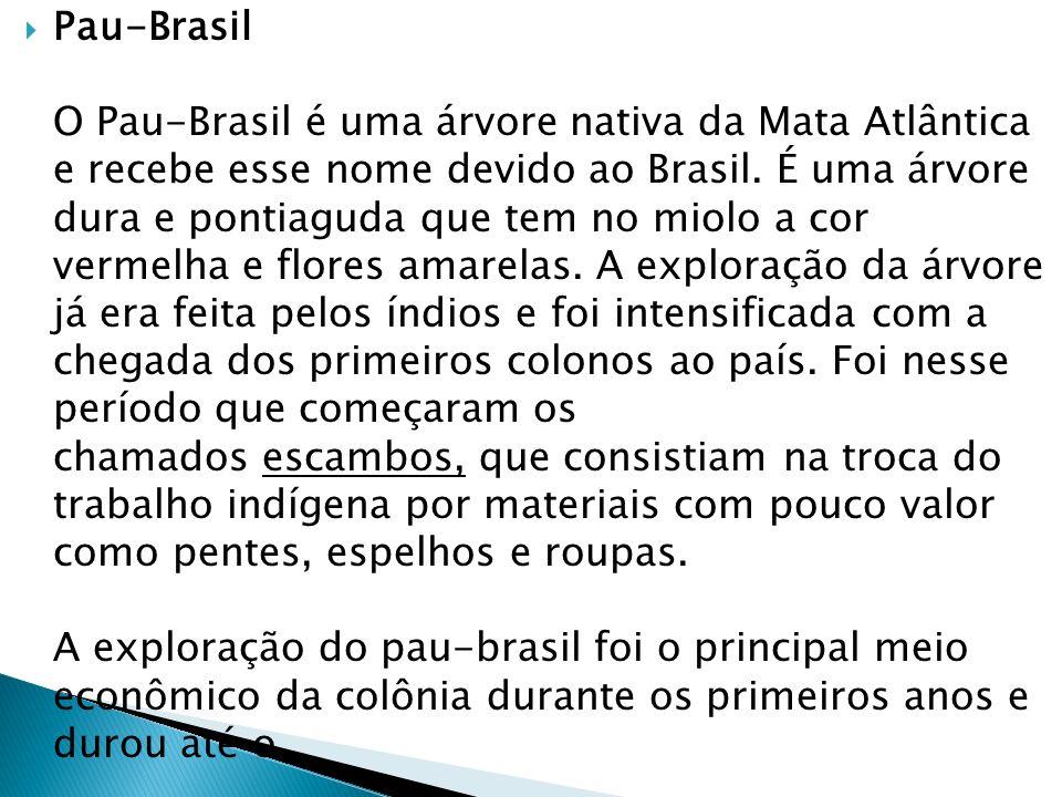 Pau-Brasil O Pau-Brasil é uma árvore nativa da Mata Atlântica e recebe esse nome devido ao Brasil. É uma árvore dura e pontiaguda que tem no miolo a c