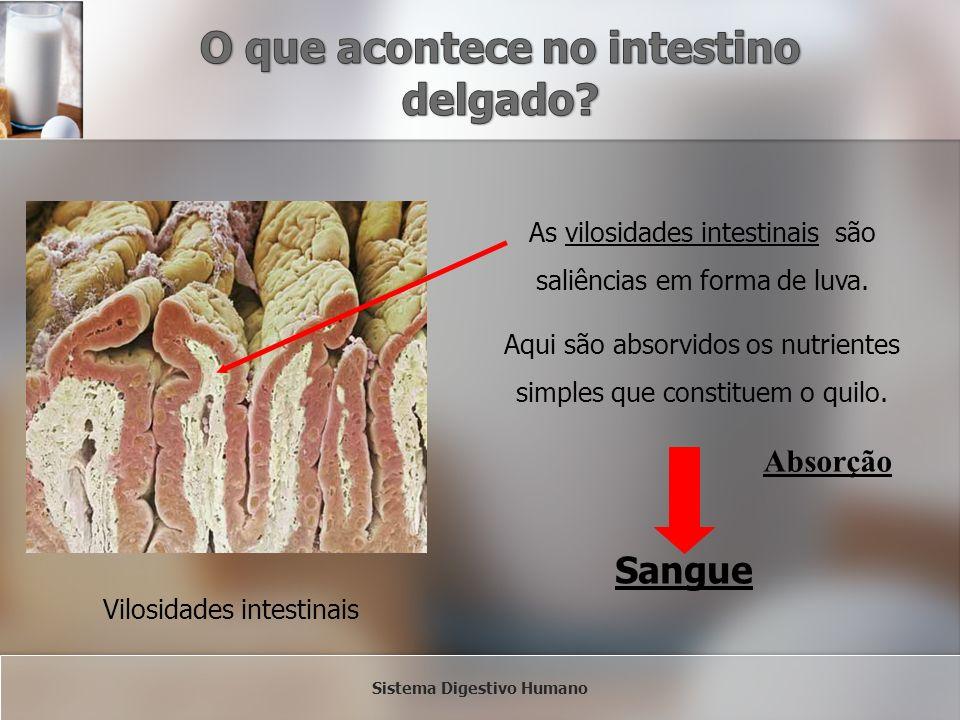 Vilosidades intestinais As vilosidades intestinais são saliências em forma de luva. Aqui são absorvidos os nutrientes simples que constituem o quilo.
