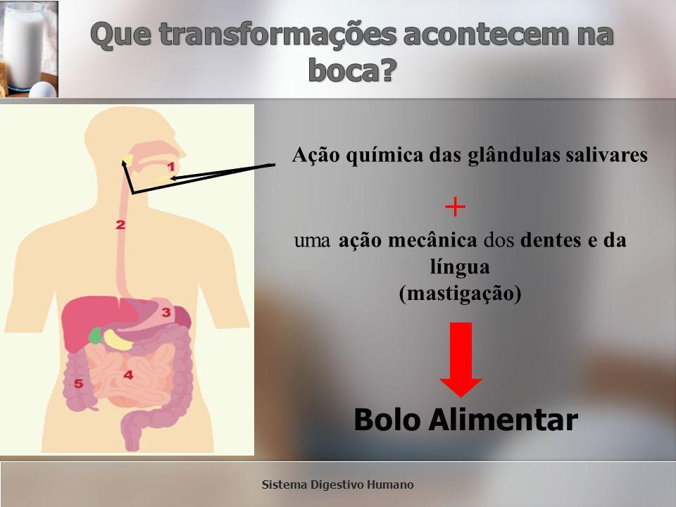 Ação química das glândulas salivares + uma ação mecânica dos dentes e da língua (mastigação) Bolo Alimentar Sistema Digestivo Humano