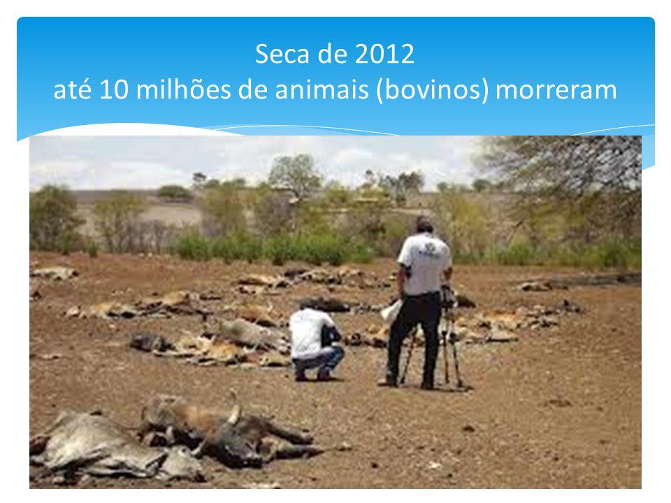 Seca de 2012 até 10 milhões de animais (bovinos) morreram