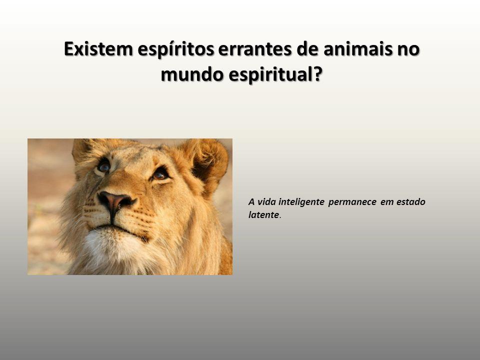 Existem espíritos errantes de animais no mundo espiritual? A vida inteligente permanece em estado latente.