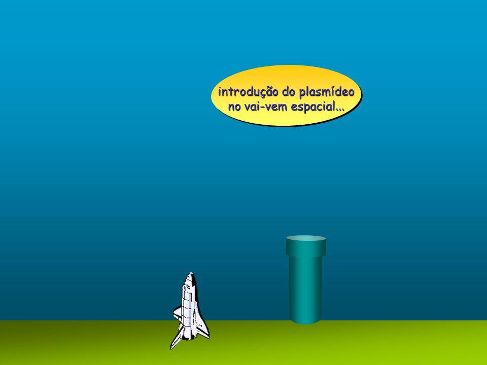 introdução do plasmídeo no vai-vem espacial...