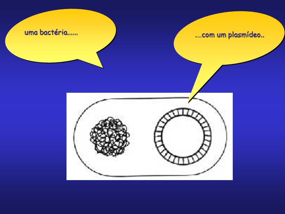 Bactérias (Vistas ao Microscópio)