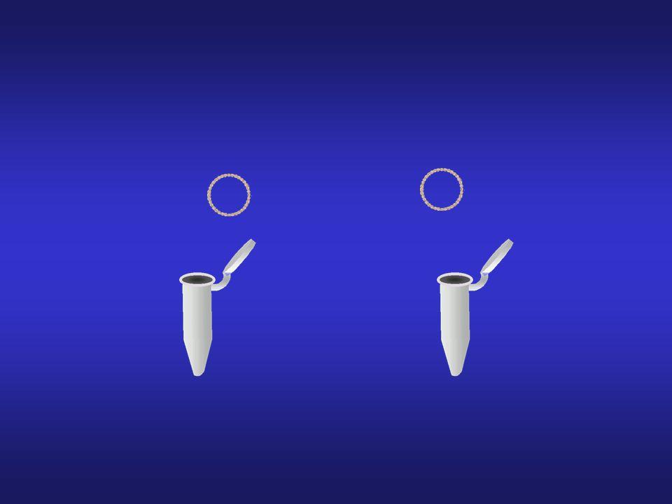 Plasmídeo (ADN circular fechado)