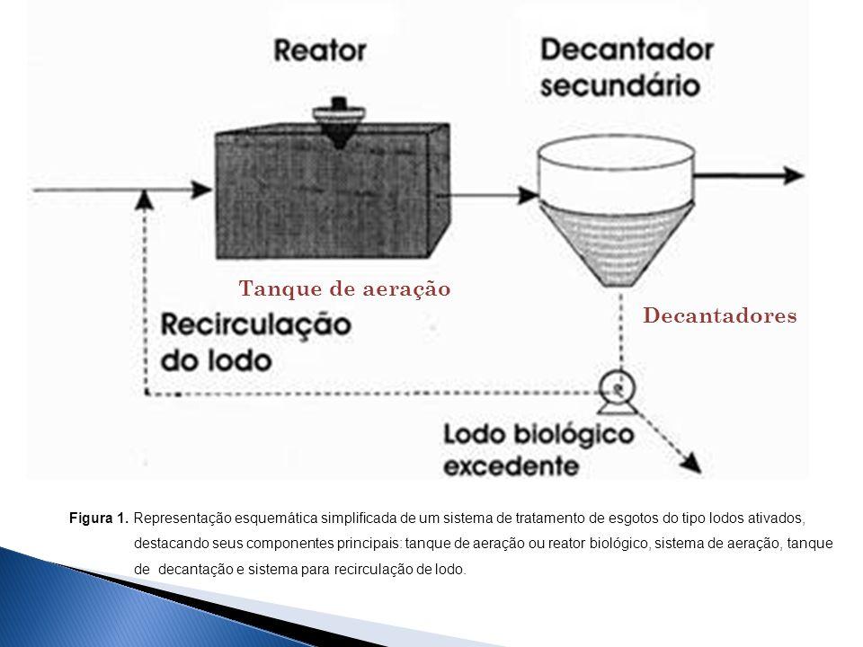 Tanque de aeração Decantadores Figura 1. Representação esquemática simplificada de um sistema de tratamento de esgotos do tipo lodos ativados, destaca