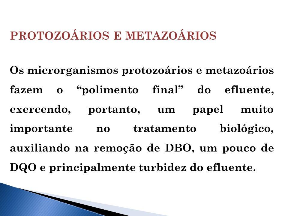 PROTOZOÁRIOS E METAZOÁRIOS Os microrganismos protozoários e metazoários fazem o polimento final do efluente, exercendo, portanto, um papel muito importante no tratamento biológico, auxiliando na remoção de DBO, um pouco de DQO e principalmente turbidez do efluente.
