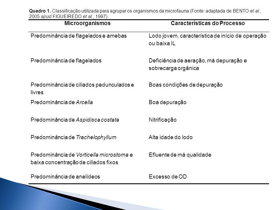 MicroorganismosCaracterísticas do Processo Predominância de flagelados e amebas Lodo jovem, característica de início de operação ou baixa IL Predominância de flagelados Deficiência de aeração, má depuração e sobrecarga orgânica Predominância de ciliados pedunculados e livres Boas condições de depuração Predominância de ArcellaBoa depuração Predominância de Aspidisca costataNitrificação Predominância de TrachelophyllumAlta idade do lodo Predominância de Vorticella microstoma e baixa concentração de ciliados fixos Efluente de má qualidade Predominância de anelídeosExcesso de OD Quadro 1.