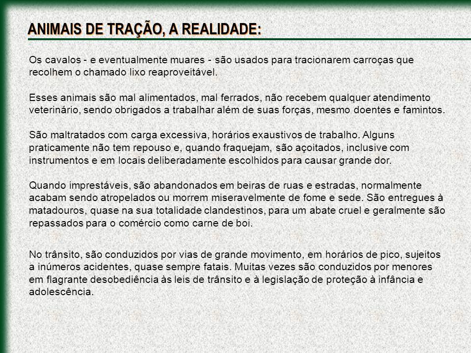 O sacrifício de eqüinos no CCZ de São Paulo é um processo cruel, anti-ético e ilegal.