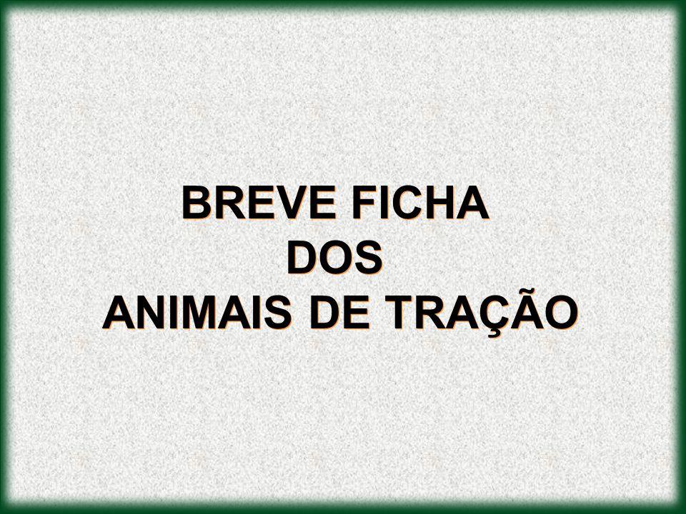 BREVE FICHA DOS ANIMAIS DE TRAÇÃO BREVE FICHA DOS ANIMAIS DE TRAÇÃO