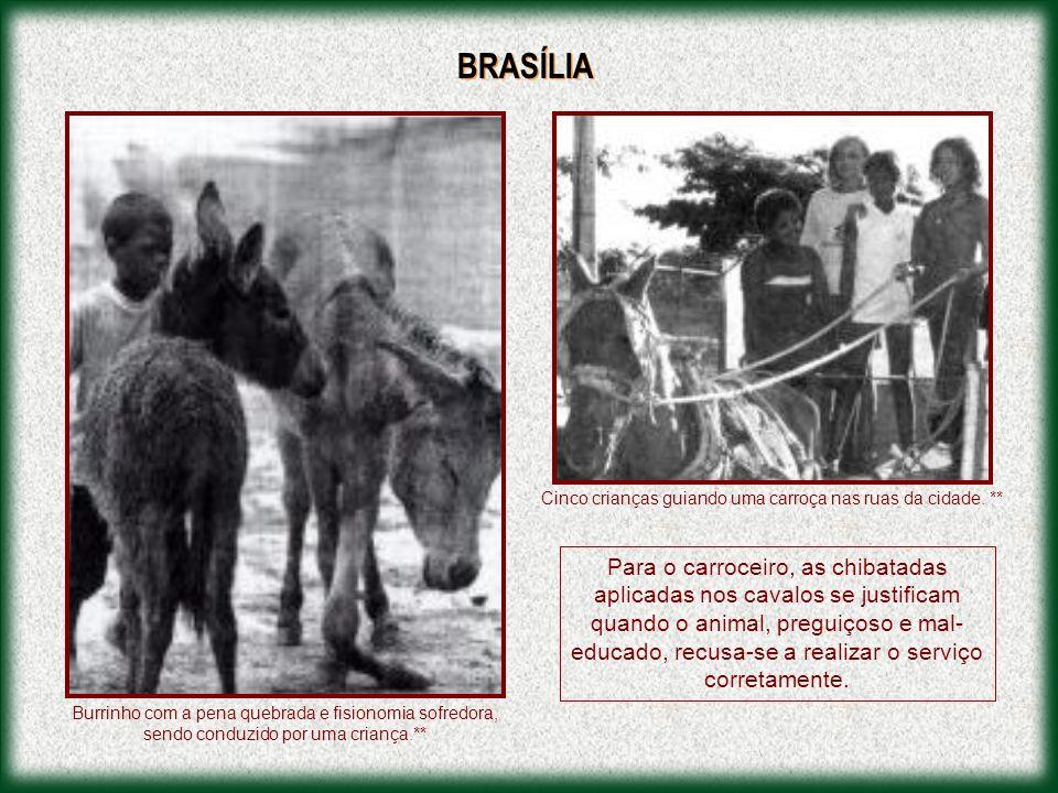 Esta apresentação é dedicada a Celina Valentino, a Celina dos Leões e dos Cavalos.