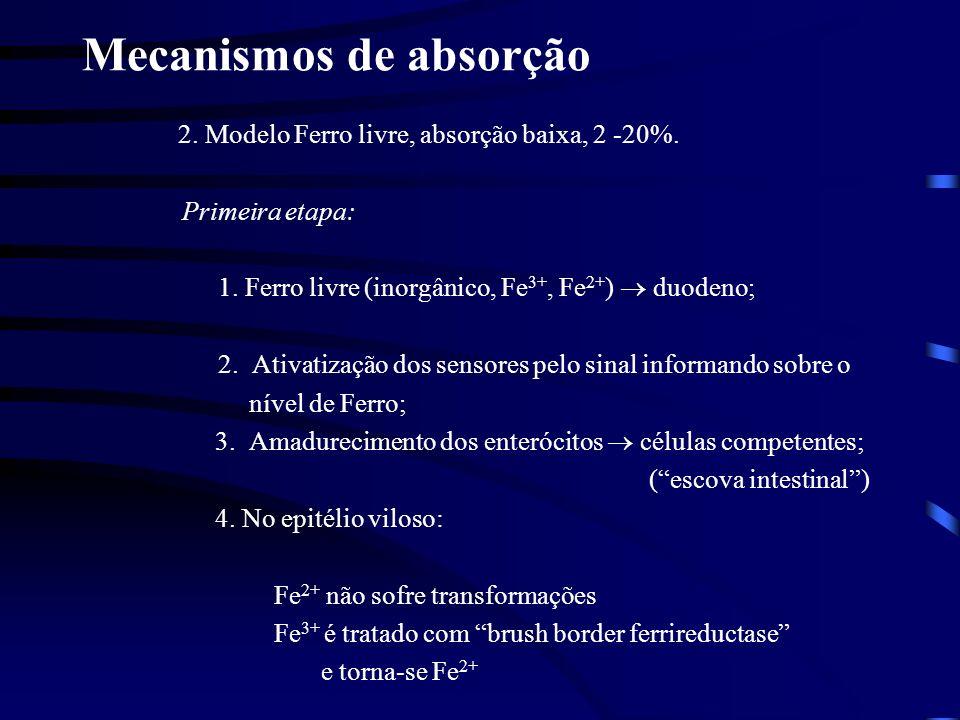 Mecanismos de absorção Segunda etapa: 5.