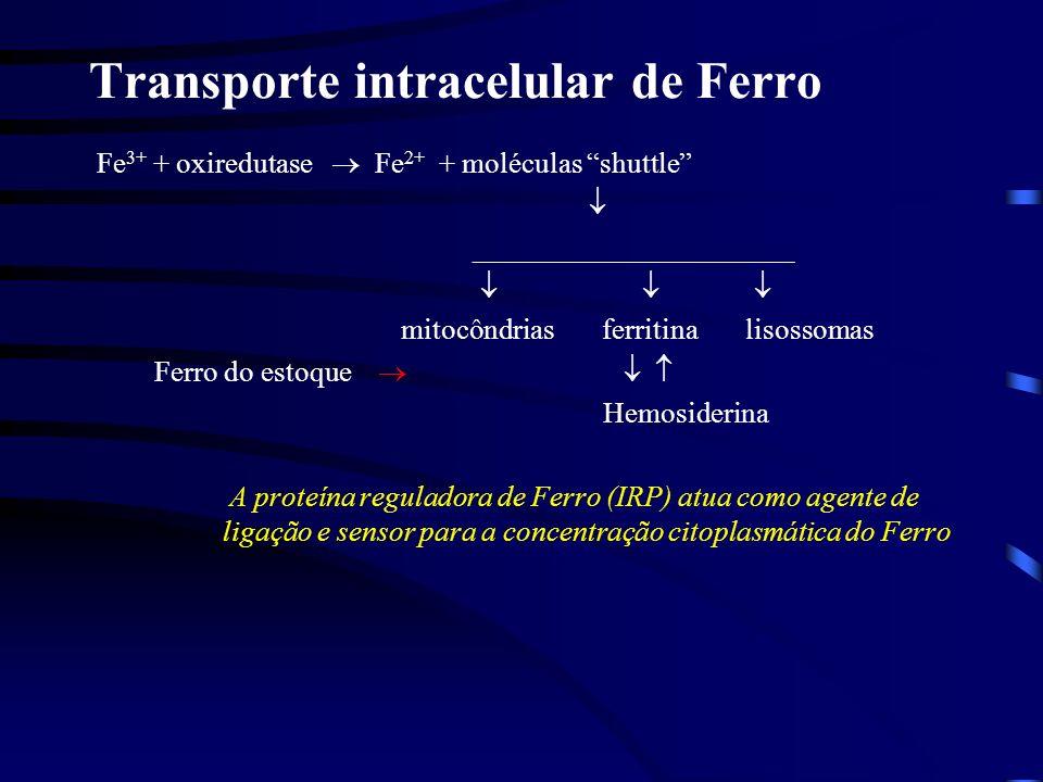 Estoque intracelular de ferro Ferritinas de diferentes tecidos: a.fígado; b.