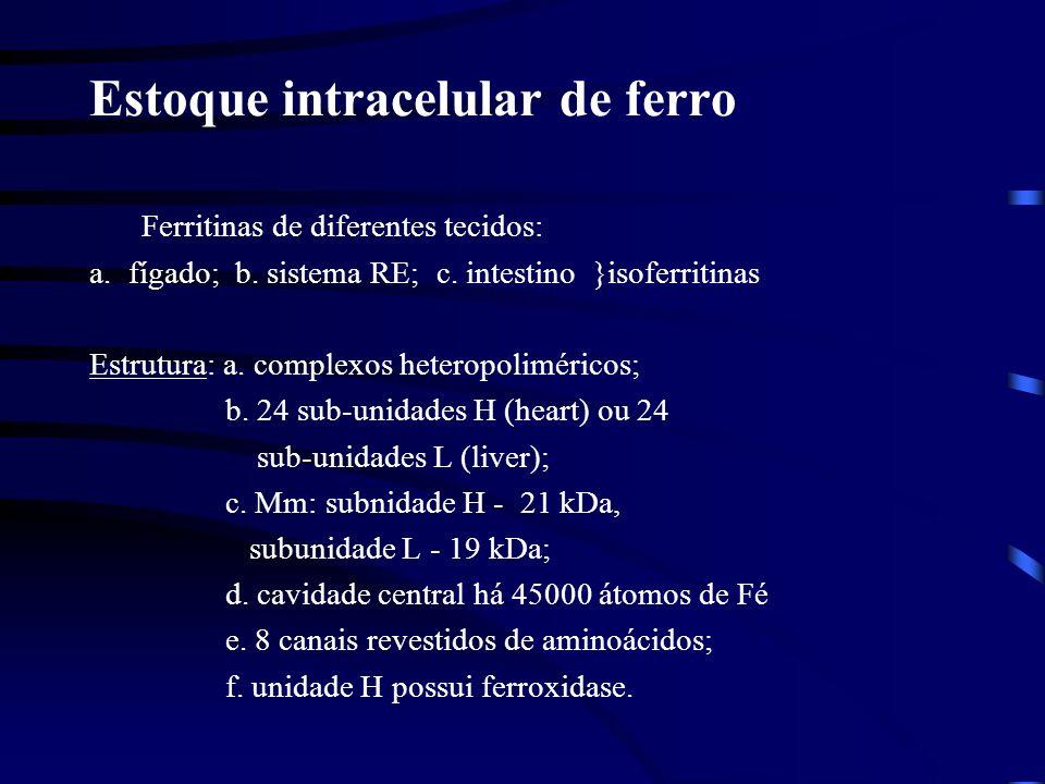 Estoques de ferro: Ferritina