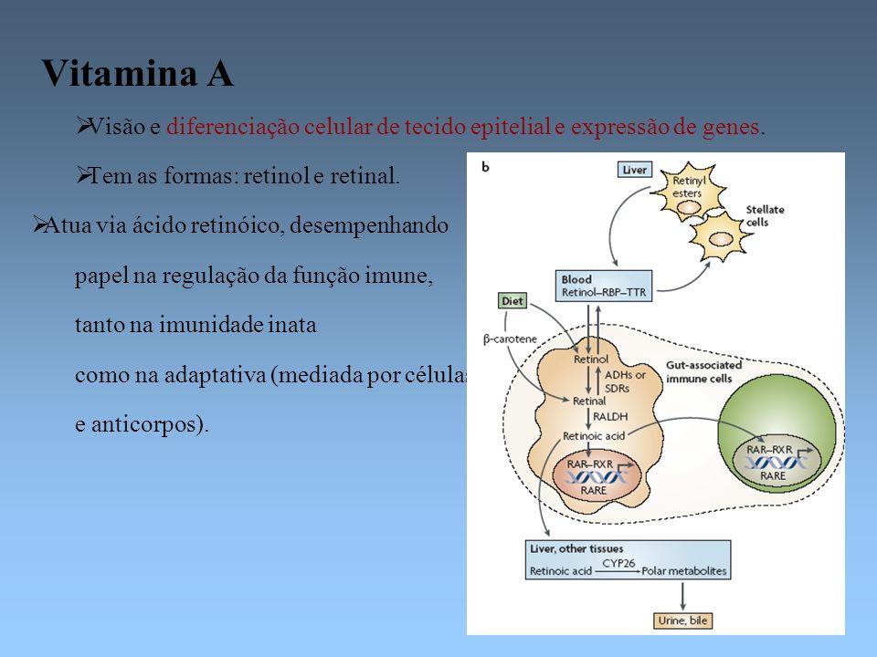 Vitamina A Visão e diferenciação celular de tecido epitelial e expressão de genes. Tem as formas: retinol e retinal. Atua via ácido retinóico, desempe