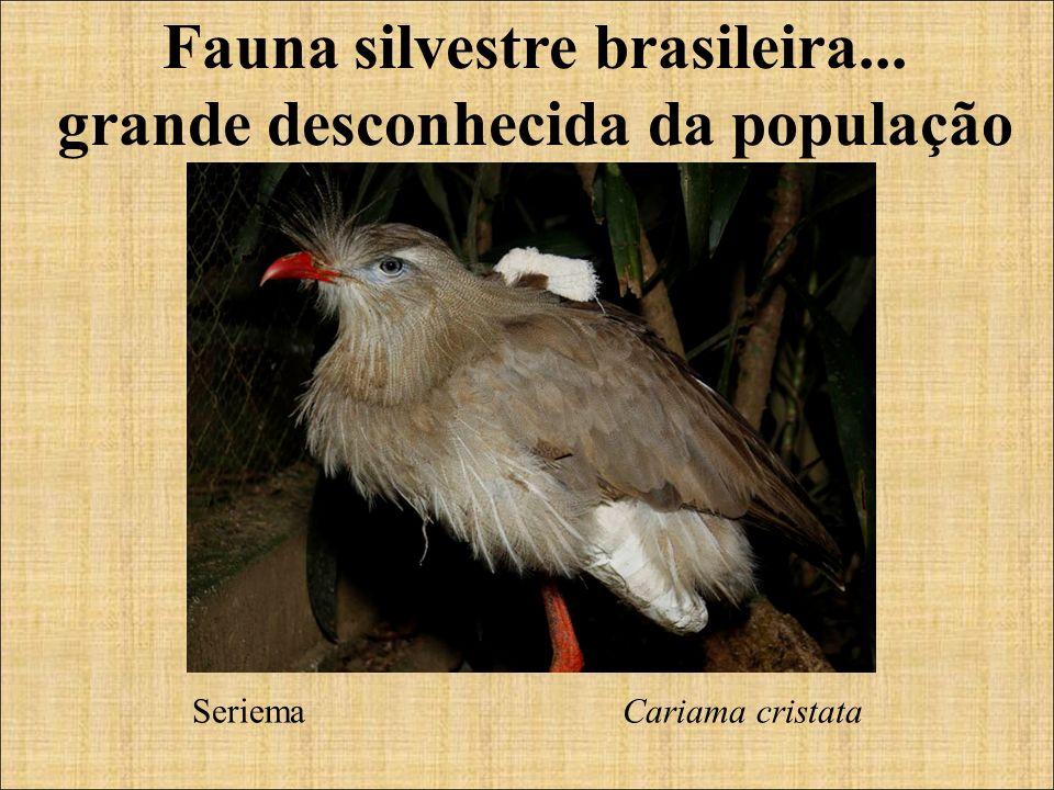 Fauna silvestre brasileira... grande desconhecida da população Seriema Cariama cristata