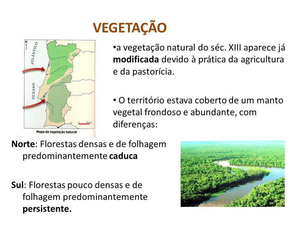 VEGETAÇÃO Norte: Florestas densas e de folhagem predominantemente caduca Sul: Florestas pouco densas e de folhagem predominantemente persistente. a ve