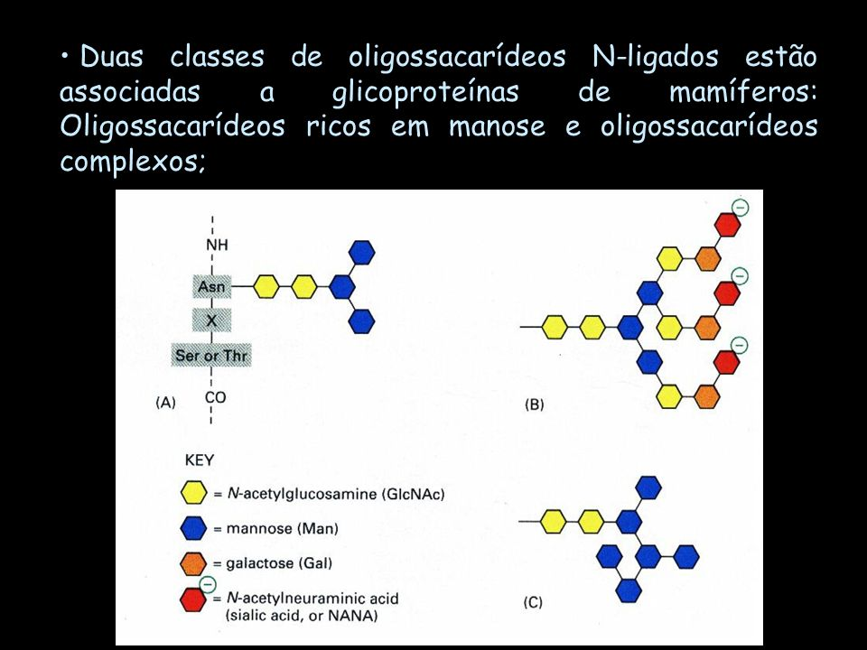 Duas classes de oligossacarídeos N-ligados estão associadas a glicoproteínas de mamíferos: Oligossacarídeos ricos em manose e oligossacarídeos complex