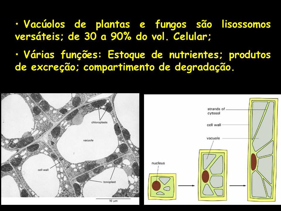 Vacúolos de plantas e fungos são lisossomos versáteis; de 30 a 90% do vol. Celular; Várias funções: Estoque de nutrientes; produtos de excreção; compa