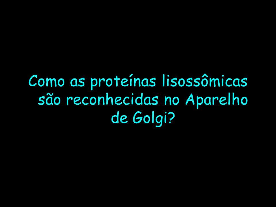 Como as proteínas lisossômicas são reconhecidas no Aparelho de Golgi?