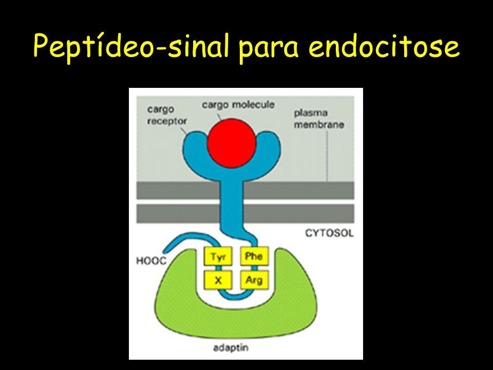 Peptídeo-sinal para endocitose