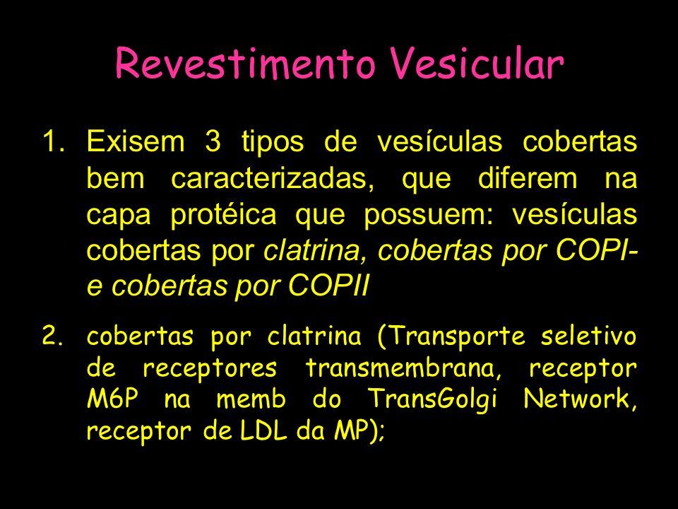 Revestimento Vesicular 1.Exisem 3 tipos de vesículas cobertas bem caracterizadas, que diferem na capa protéica que possuem: vesículas cobertas por cla