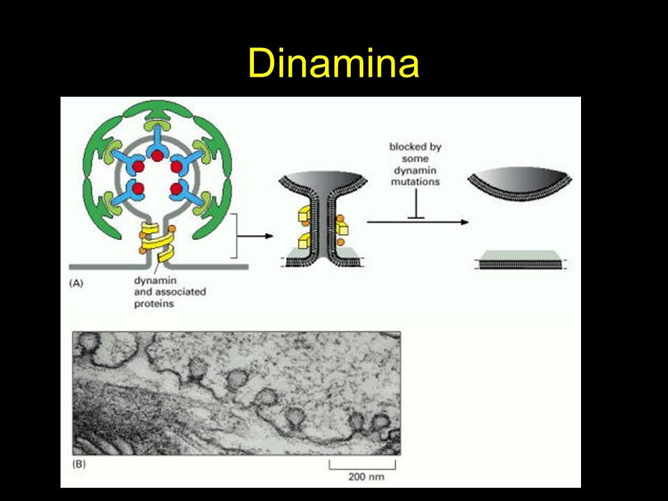 Dinamina