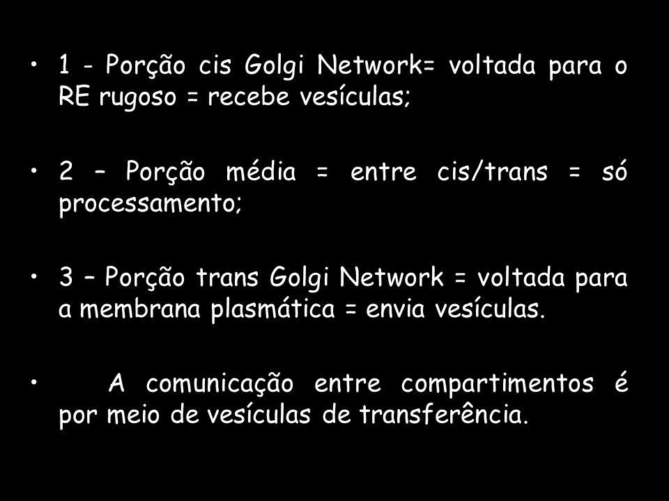 1 - Porção cis Golgi Network= voltada para o RE rugoso = recebe vesículas; 2 – Porção média = entre cis/trans = só processamento; 3 – Porção trans Gol
