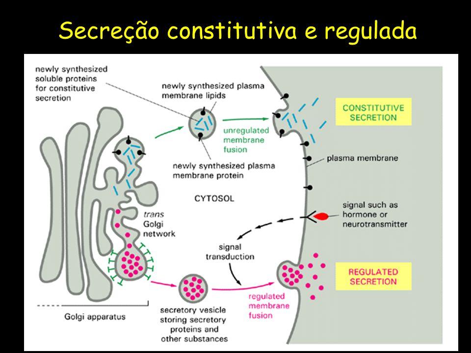Secreção constitutiva e regulada