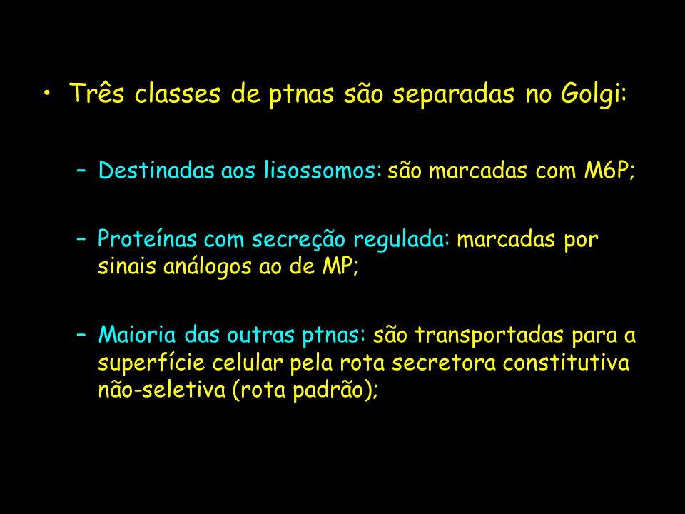 Três classes de ptnas são separadas no Golgi: –Destinadas aos lisossomos: são marcadas com M6P; –Proteínas com secreção regulada: marcadas por sinais