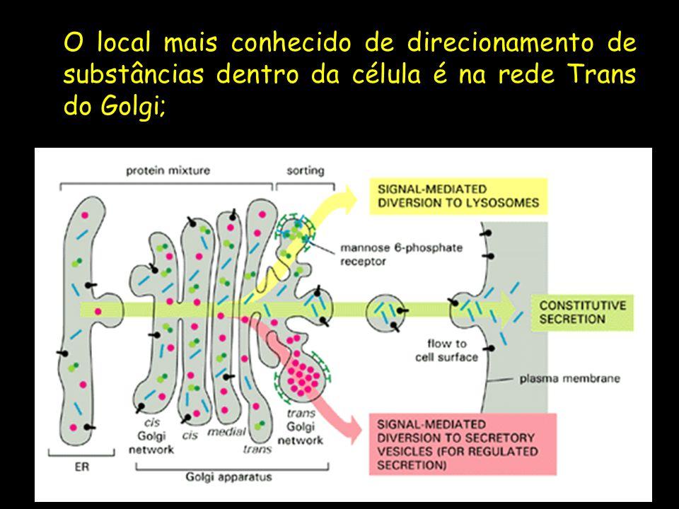 O local mais conhecido de direcionamento de substâncias dentro da célula é na rede Trans do Golgi;