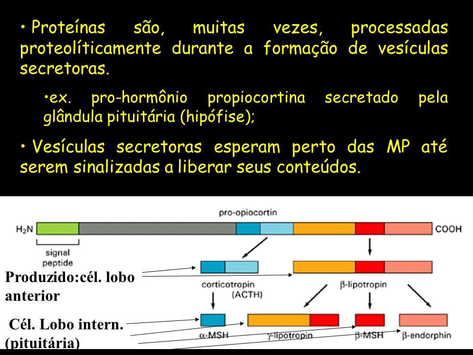 Proteínas são, muitas vezes, processadas proteolíticamente durante a formação de vesículas secretoras. ex. pro-hormônio propiocortina secretado pela g