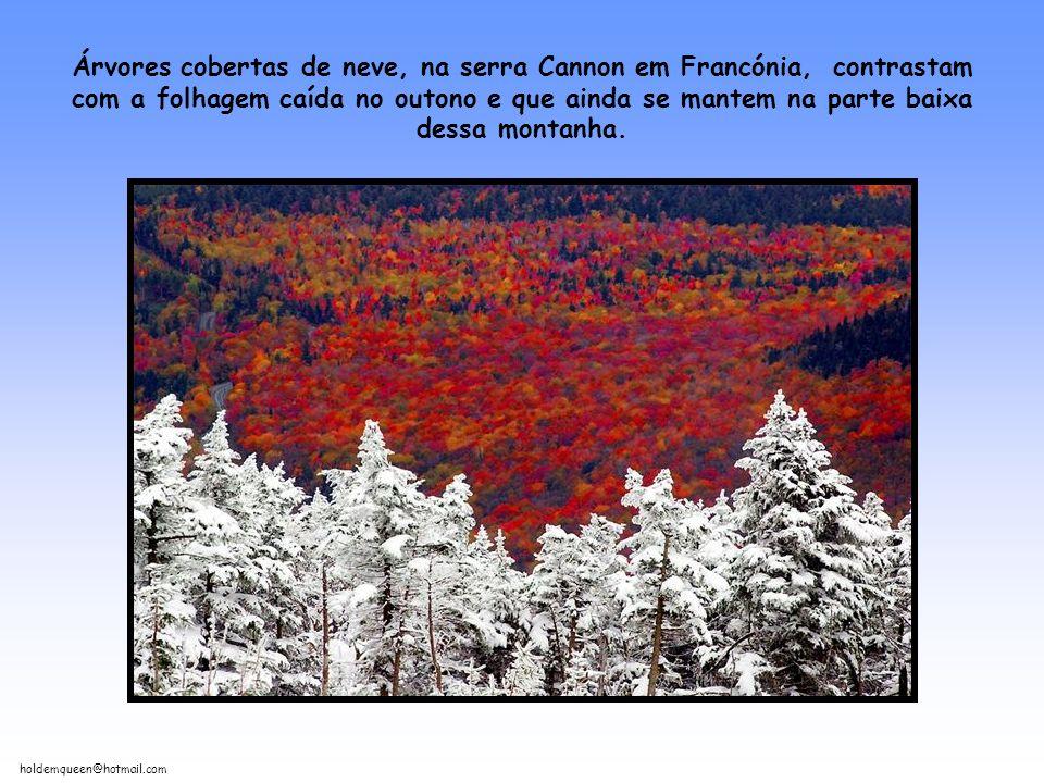 holdemqueen@hotmail.com Árvores cobertas de neve, na serra Cannon em Francónia, contrastam com a folhagem caída no outono e que ainda se mantem na parte baixa dessa montanha.