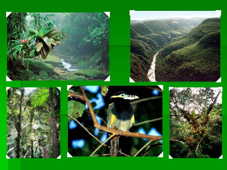 1999 Reservas de Mata Atlântica do Sudeste – Localizadas nos estados do Paraná e de São Paulo, contém alguns dos maiores e melhores exemplos de mata a